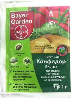 Мучнистый червец на комнатных растениях - какими средствами и препаратами можно избавиться